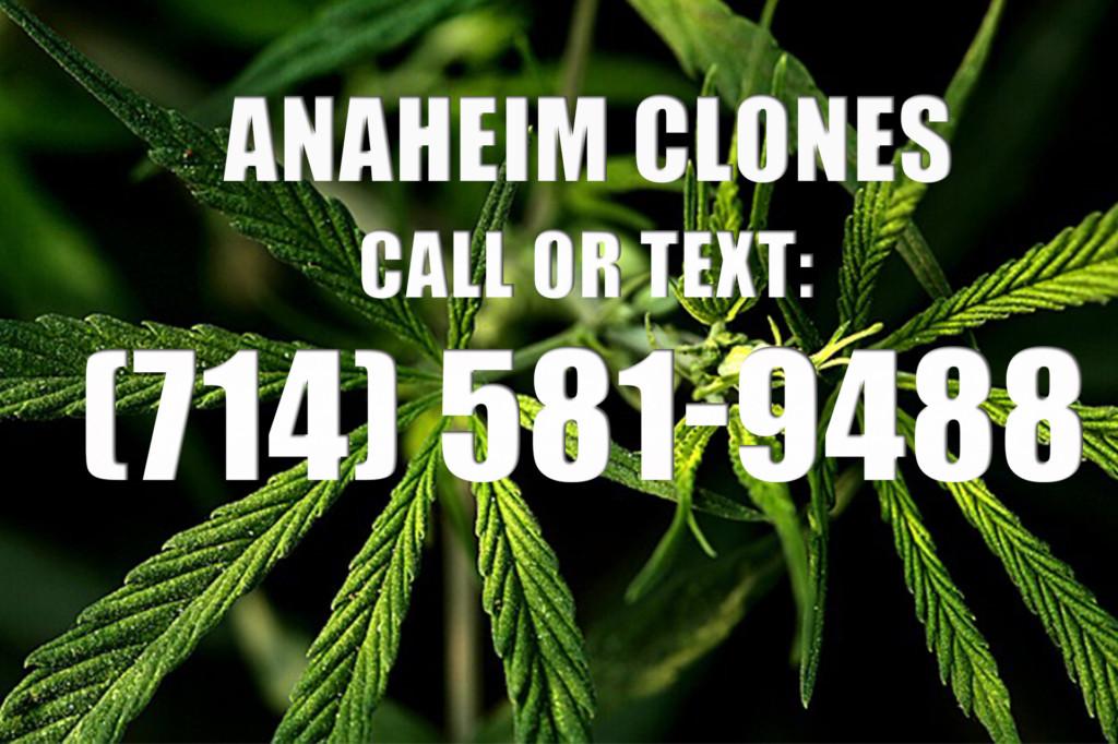 Anaheim Clones for Sale