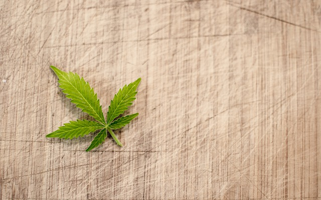 Are-Marijuana-Clones-Truly-Medicine