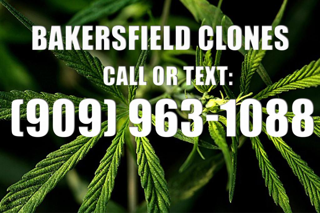 Bakersfield Clones for Sale