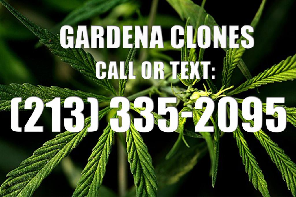 Gardena Clones for Sale
