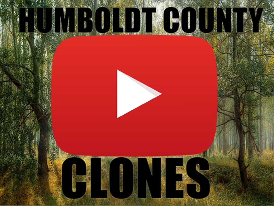 Humboldt County Clones for Sale