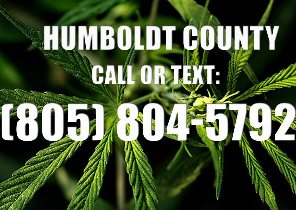 Humboldt-County-Clones-for-Sale