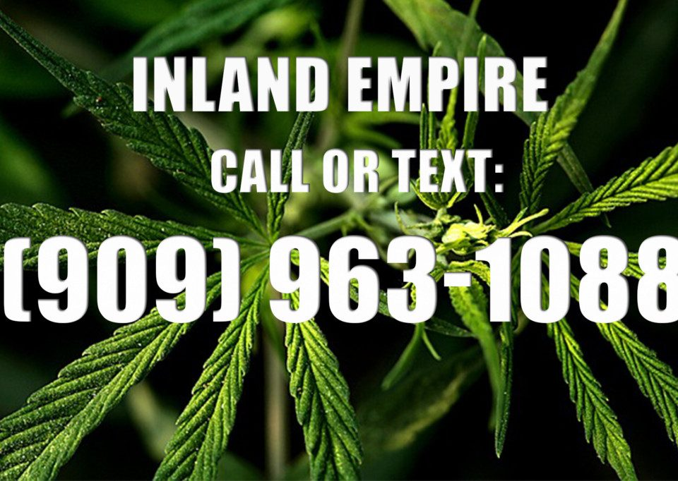 Inland-Empire-Clones-for-Sale