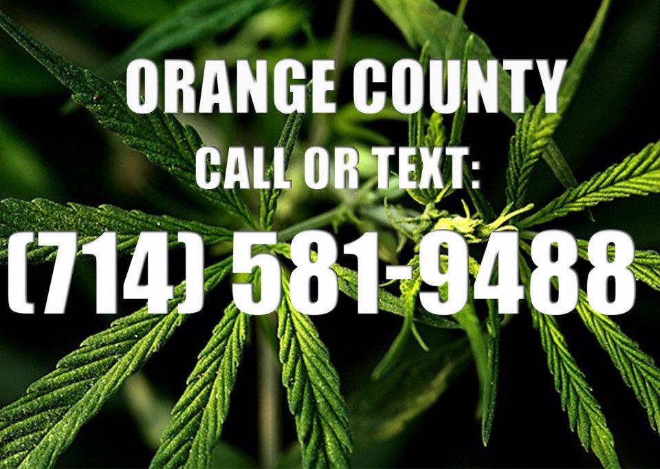 Orange-County-Clones-for-Sale