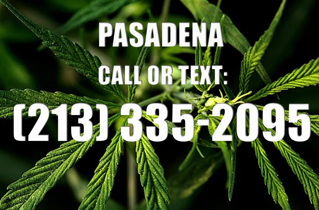 Pasadena-Clones-for-Sale