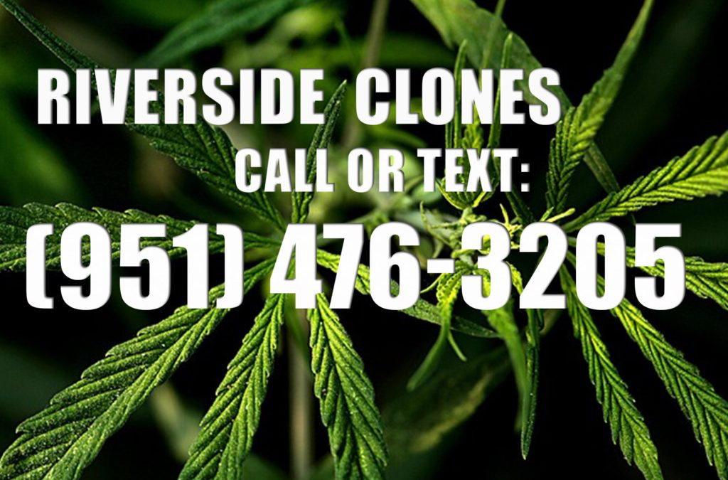 Riverside-Clones-for-Sale