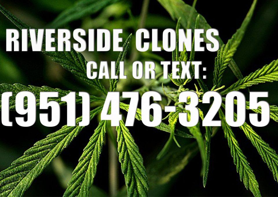 Riverside-Clones-for-Sale