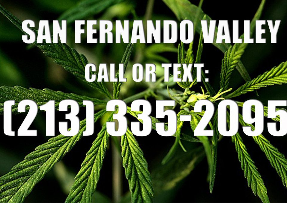 San-Fernando-Valley-Clones-for-Sale