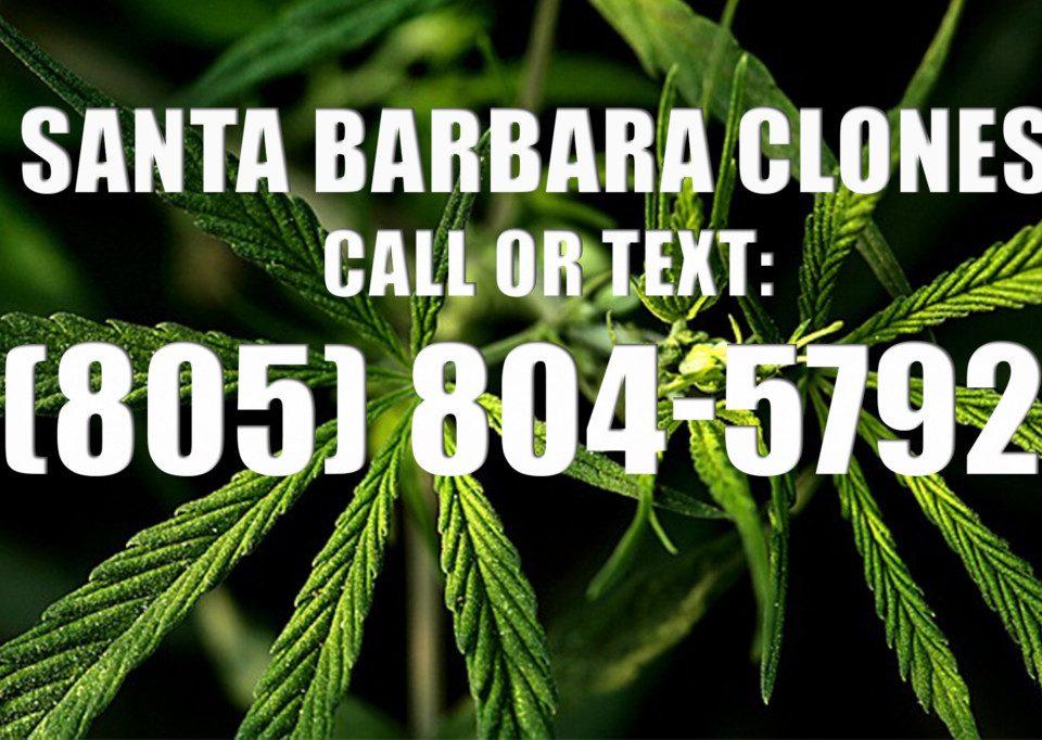 Santa-Barbara-Clones