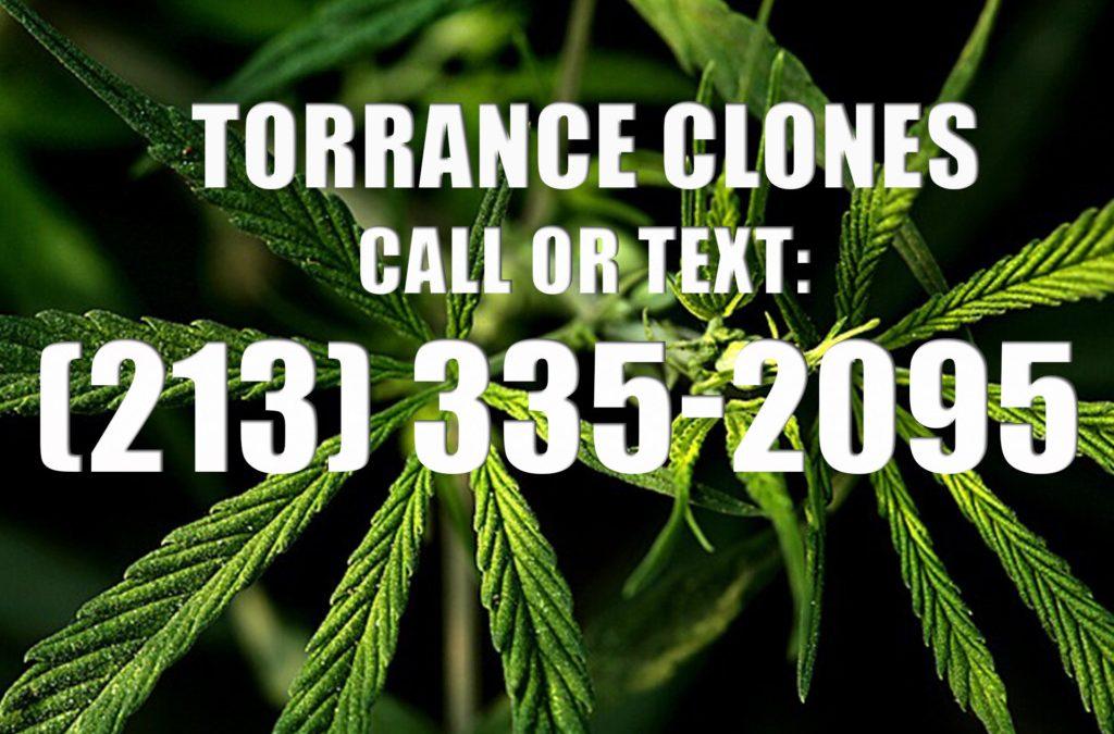Torrance-Clones-for-Sale