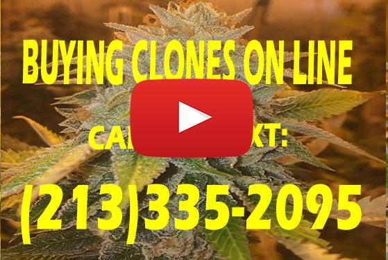 Buying Clones Online