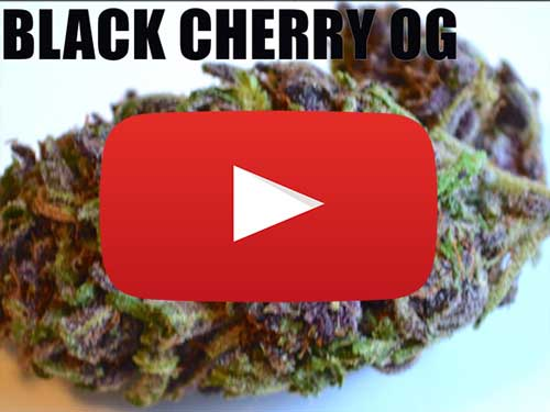 Black Cherry OG