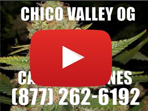 Chico Valley OG