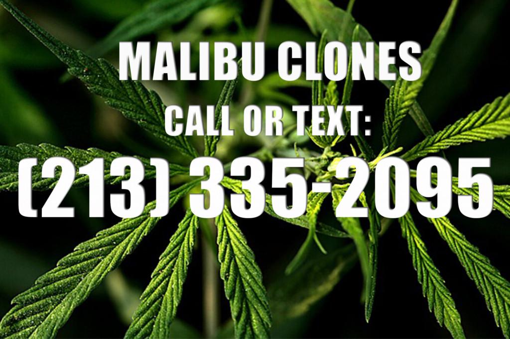 Malibu Clones for Sale