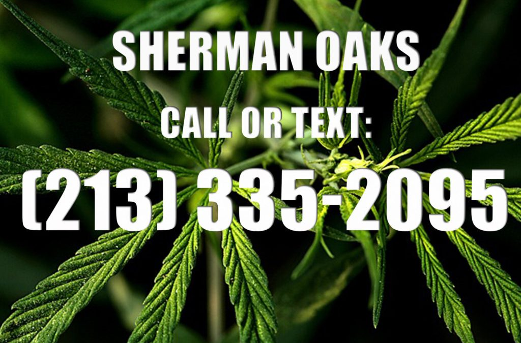 Sherman-Oaks-Clones-for-Sale