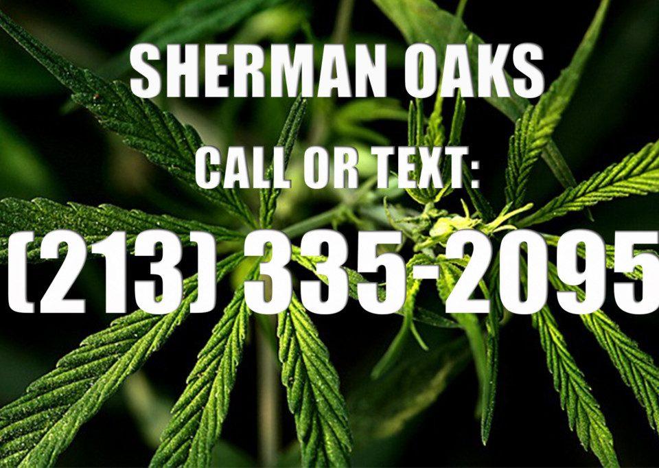 Sherman-Oaks-Clones-for-Sale
