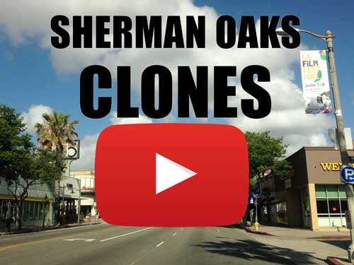 Sherman Oaks Clones for Sale