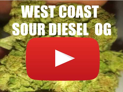 West Coast Sour Diesel OG