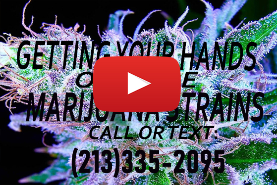 Getting Your Hands On Rare Marijuana Strains