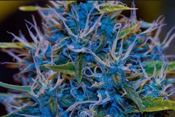 Rare Marijuana