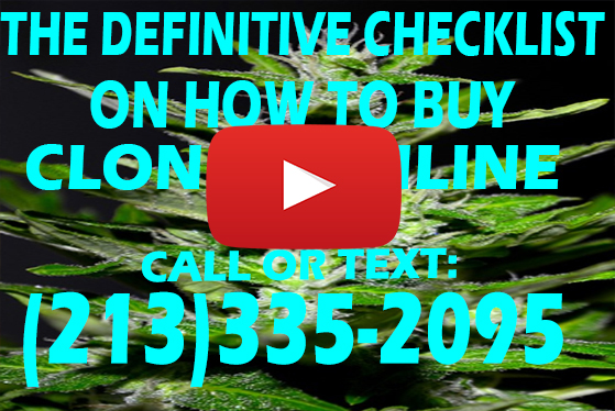 The Definitive CheckList on How to Buy Clones Online