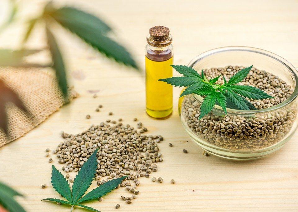 Cannabis Clones Vs. Seeds