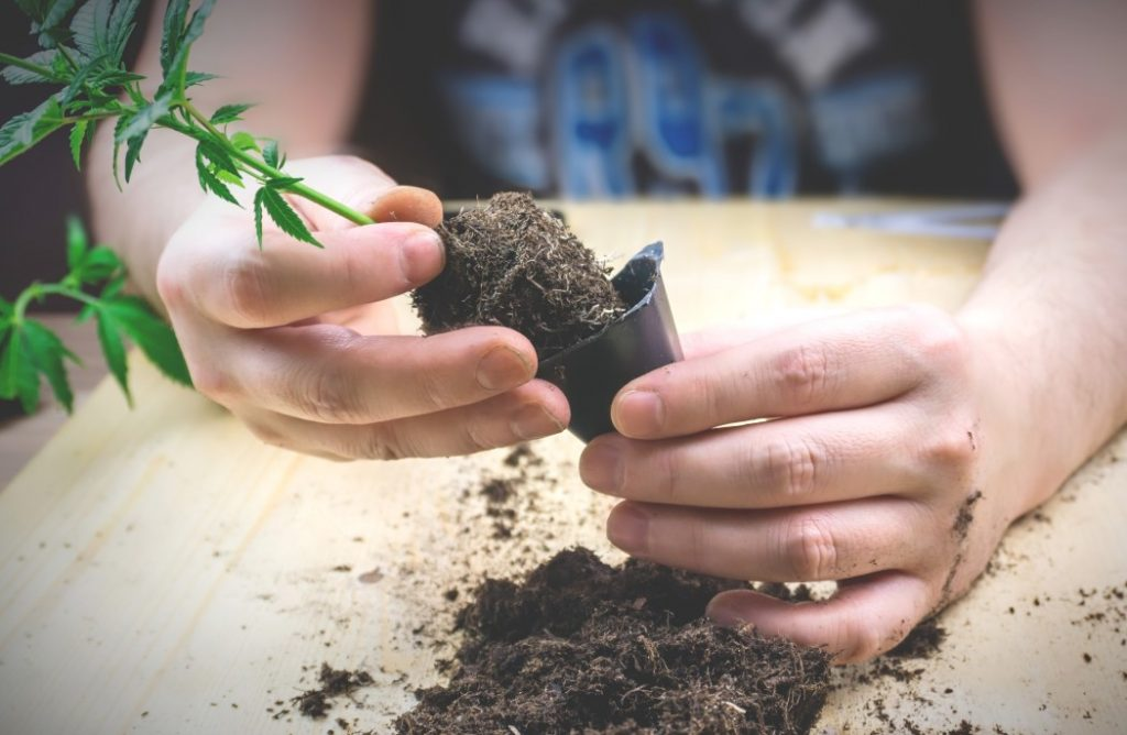 Top Tips For Successful Transplanting